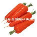 Гидролат семян моркови дикой